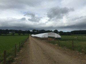 Logie Durno Sheep Farm