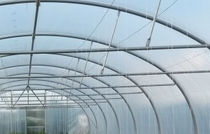 Polytunnels for Tomatoes